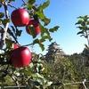 諏訪湖周辺 りんご狩り リンゴ直売の高島農園
