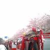 桜と火の用心