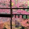 瑠璃光院訪問記その1(2018/11/26)