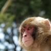 「身体は大人、頭脳は猿」怒鳴る上司の正しい扱い方。
