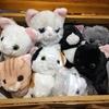 10種類紹介!鎌倉で買えるお土産は猫のぬいぐるみをチョイス?!【鎌倉ねこサロン】
