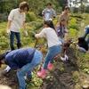 子どもたちの食育活動でサツマイモ掘り