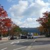 曽祖父の旅路を辿る① 京都市動物園 ツシマヤマネコ、九重の塔跡メインで