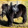 ジェナーテラ大陸の馬の歴史