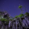 【天体撮影記 第131夜】 春の夜に咲き誇る藤の花と北斗七星