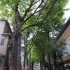 懐かしい昭和の風景――鬼子母神堂参拝。