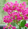 ハイビスカスやアジサイ@夫の実家の♪元気になる花たちです!!
