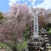 多摩川桜百景 -75. 龍珠院-
