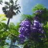 6日(土)からの熱海のジャカランダフェスティバルは中止 新型コロナウイルス感染拡大