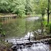 大町公園の池(千葉県市川)