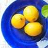 【観察】市販のレモンの種から収穫できるまで木が育つのか?
