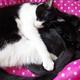 今日の黒猫モモ&白黒猫ナナの動画ー829
