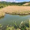 小松の沼(高知県高知)