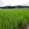 稲作だより(令和元年7月)
