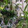 絶対に行ってみるべき観葉植物や多肉植物の専門店『cocoha』