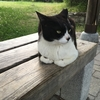 猫かわいいよ猫