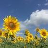 季節感が楽しめる農場 花の海