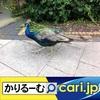 2020年5月分 広報・記事等 cari.jp
