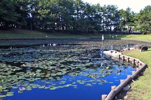 イザナギも禊する 江田神社の聖なる池で