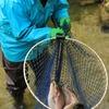 肴ならではの川魚料理 【虹鱒の冷燻】