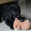 選ぶのが楽しい!犬用おもちゃ