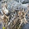 11月の畑の様子