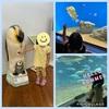 【育児4歳】葛西臨海水族園に行ってきました