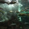 和歌山 南紀白浜(2日目)水族館&釣り 平成30年9月16日