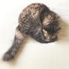 【あるある】猫の毎朝恒例行事「新鮮さん」