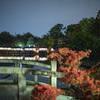 夜の長岡天満宮八条が池でキリシマツツジや新緑を撮る@2021