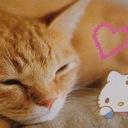 ねこマイ(猫とマインドフルネス)