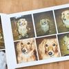 大量にあった愛犬写真を一冊のアルバムにしました