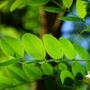 【葉っぱで気になる木がわかる】出会った木がなにかを知りたければ、本書をどうぞ