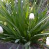 春の花、色とりどりに綺麗に開花してくれました。♪♪♪