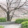 にっき:桜狩、更新、オン呑み