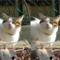 立体視写真(交差法)を1枚しかない写真でつくってみた。陽だまりの猫、かなたのステレオグラム。