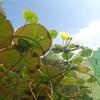 【ビオトープ】睡蓮鉢でのメダカの飼育方法とメダカの産卵・孵化・繁殖の注意点