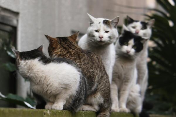 「猫を撮っている間は猫を飼えない」 37歳で独立した猫写真家・沖昌之さんに聞く