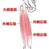 【基礎から学ぶ】膝の伸展筋(大腿四頭筋)【解剖生理学】