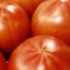 アメーラトマトとは?特徴、糖度、値段、旬を知る|高級フルーツトマトの魅力