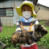 チャウスはたけの楽校~ジャガイモ掘り【活動レポート】