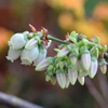花盛りのベランダ2020 (4)