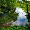 柿田川湧水群。日本で最も短い一級河川は、家康も晩年を過ごしたいと思っていた富士山からの雪解け水が湧き出る城跡。