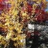 箕面の紅葉と茨木のりこ「それを選んだ」と「四海波静」