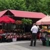 市場ジャンタロンに行って鉢植えを持って帰ってきた(14枚)