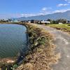 上水池(和歌山県紀の川)