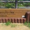 【観光】石垣島の吹通川マングローブ群落へGO!