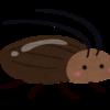 【ゴキブリ対策】僕がゴキブリを二度と見ないために実行した7つの作戦について