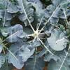 家庭園芸の醍醐味、バラバラ植え