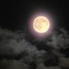 今日は満月の日だぞー!! v(≧∇≦)vFoo!! 何が起こるか教える!!